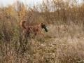 20121111_htt-wunstorf_dsc4323